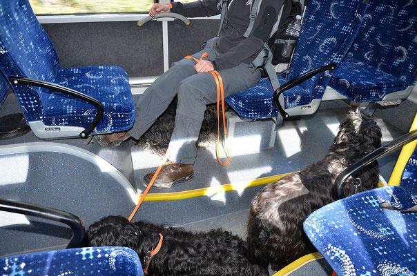 Die Racker fahren Bus