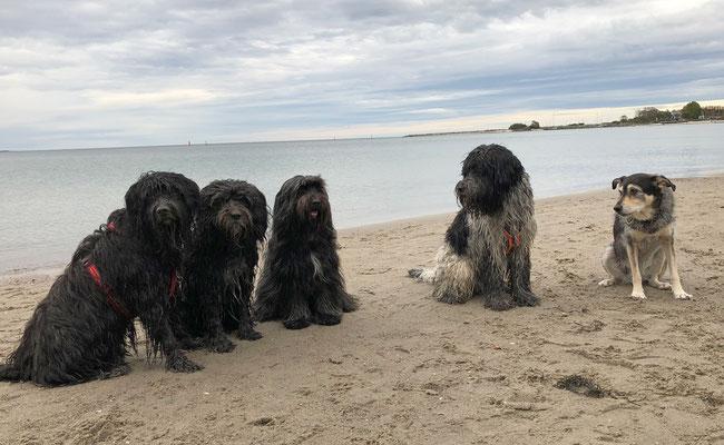 Svante, Lucie, Bailey, Anton, Julie - 2020