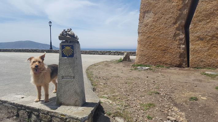 Jakobsweg mit Hund - Muxia - auf dem Weg nach Finisterra