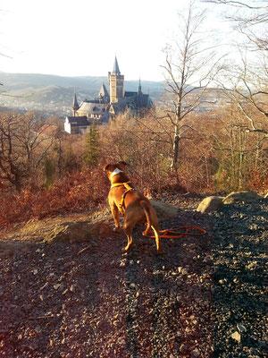 "Wandern mit ""Kampfhund"" Baldur"
