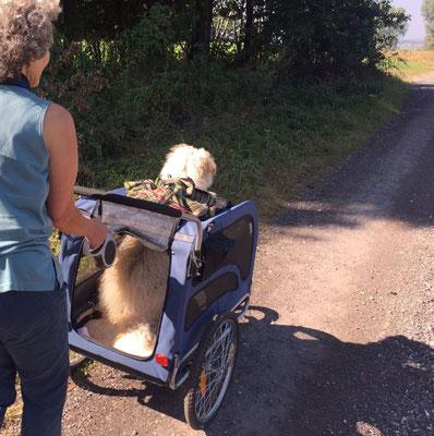 Wandern mit Handicap-Hund: Susanne und ihr Patchi.