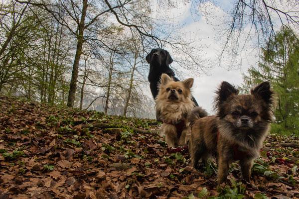 Wandern mit kleinen und mehreren Hunden: das ganze Trio. ©Lange