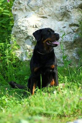 Wandern mit Kampfhund: Rottweiler Mina