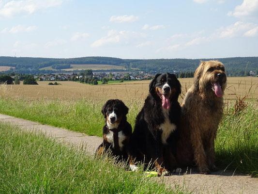Wandern mit mehreren Hunden: Franzis Rudel.