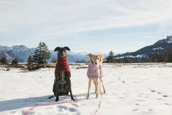 Wandern mit mehreren Hunden: Sarahs Windhunde.