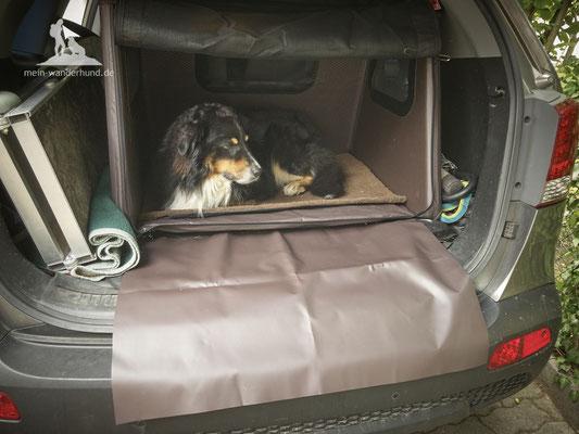 Test Tami Hundebox: Eingeschlafen und Schutzmatte