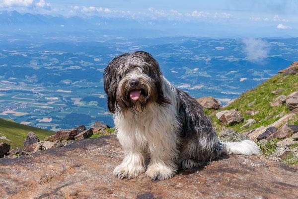 Wandern mit besonderen Hunden: Der haarige Schapendoes Clarence.