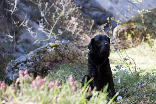 Wandern mit kleinen und mehreren Hunden: Emmi. ©Lange