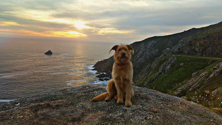 Jakobsweg mit Hund - Kap Finisterre - Ende der Welt