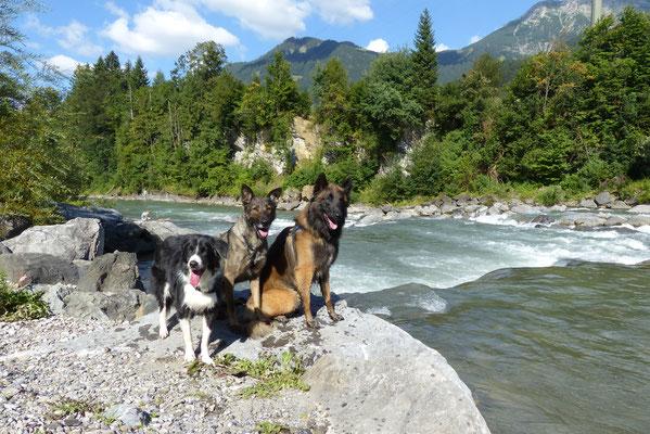 Wandern mit mehreren Hunden: Das Rudel von Beate.