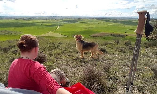 Jakobsweg mit Hund - Zeltplatz auf dem Tafelberg
