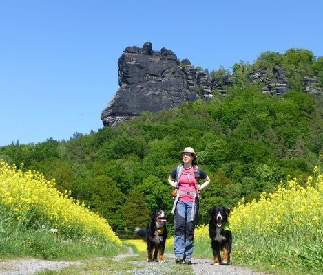 Wandern mit mehreren Hunden: Franzis und ihr Rudel.