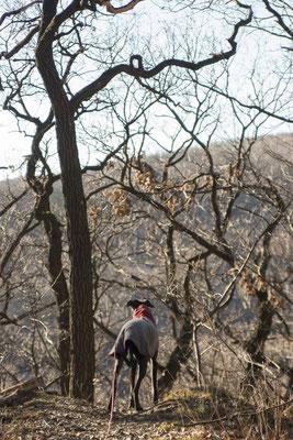 Wandern mit mehreren Hunden: Sarahs Koda