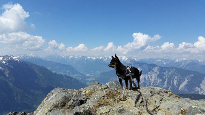 Wandern mit kleinen Hunden: Diego ©Spies