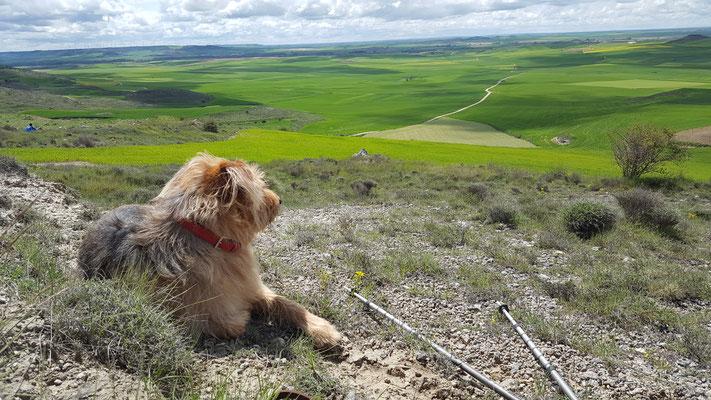 Jakobsweg mit Hund – auf dem Tafelberg.