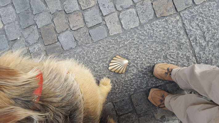 Jakobsweg mit Hund - Start in Burgos - der Muschel folgen nach Santiago