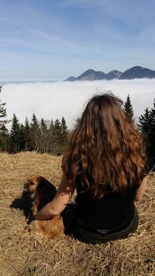 Wandern mit kleinen Hunden: Terriermix Kira ©Huber
