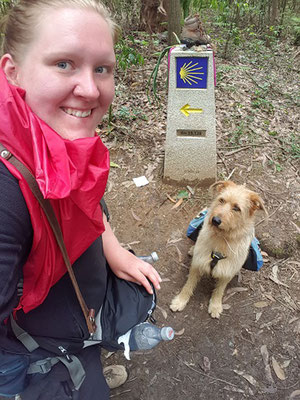 Jakobsweg mit Hund - Eukalyptuswunder kurz vor Santiago