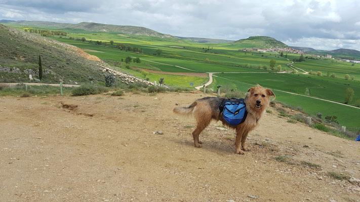 Jakobsweg mit Hund - Tafelberg bei Castrojeriz