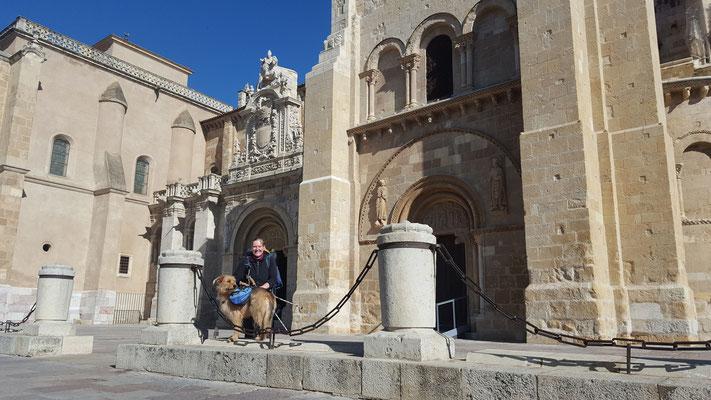 Jakobsweg mit Hund - die ersten 200 km geschafft - Ankunft in Leon