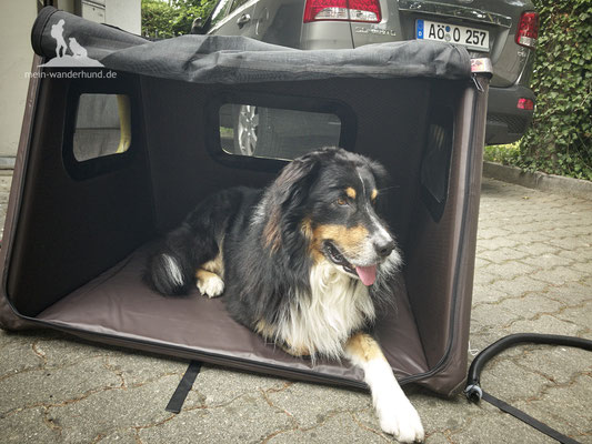 Test Tami Hundebox: Probeliegen