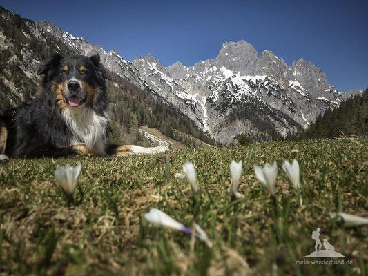 Bike & Hike mit Hund zur Bindalm: Aussicht auf der Bindalm.
