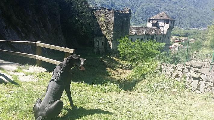 Dogge Nano und sein Rudel beim Wandern © Bettina Peters