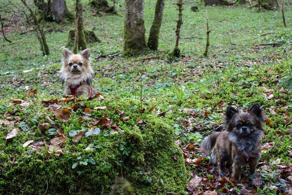 Wandern mit kleinen und mehreren Hunden. ©Lange