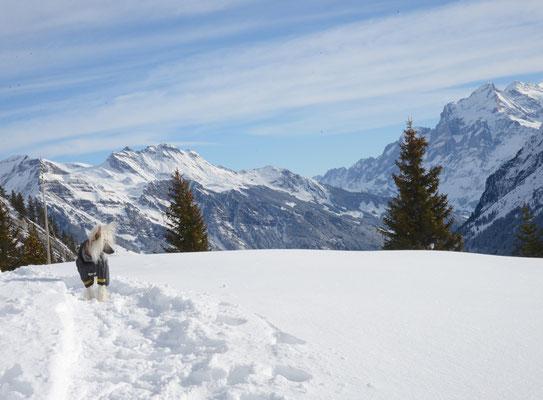 Bergschönheit Rosalie beim Winter-Wandern