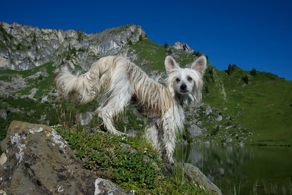Bergschönheit Rosalie beim Wandern