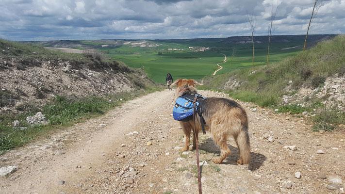 Jakobsweg mit Hund - von Burgos nach Hornillos del Camino