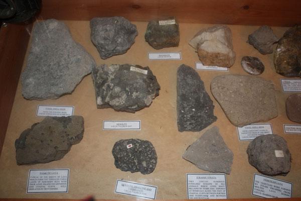 Fossiele Funde von der Küste 1