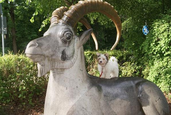 Biewer-Yorkshire-Hündin Evelina besucht den Tierpark München