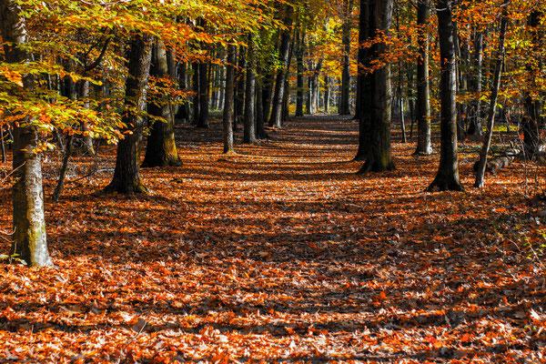 Tag 162_Herbstwald 08.11.2014