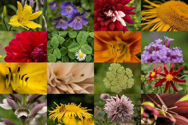 Tag 20_Blumenvielfalt im Südpark 19.06.2014