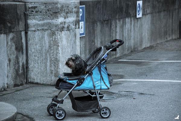 Tag 226_Hundeparkplatz 11.01.2015