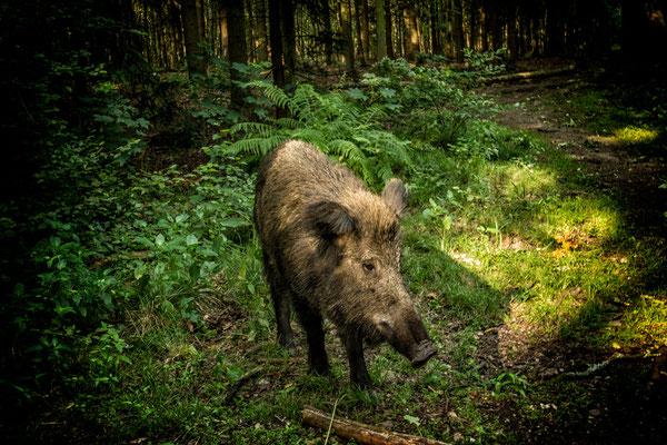 Tag 11_Im Wald 10.06.2014