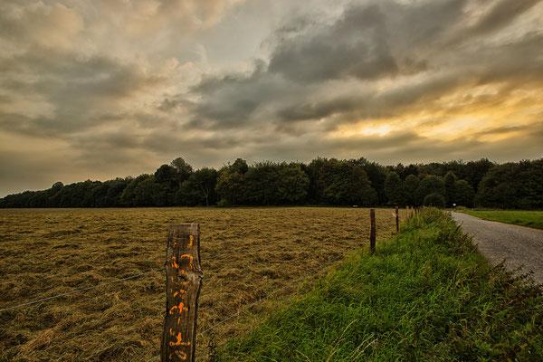 Tag 97_Es duftet nach Heu auf den Wiesen am Aaper Wald 04.09.2014