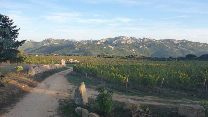 Aussicht von La Sughera - Aglientu (520müM)