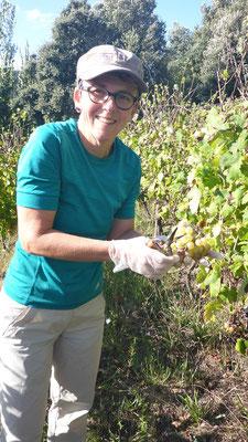 auf dem Weingut - Vermentino
