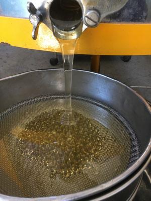 flüssiger Honig - frisch von den Waben