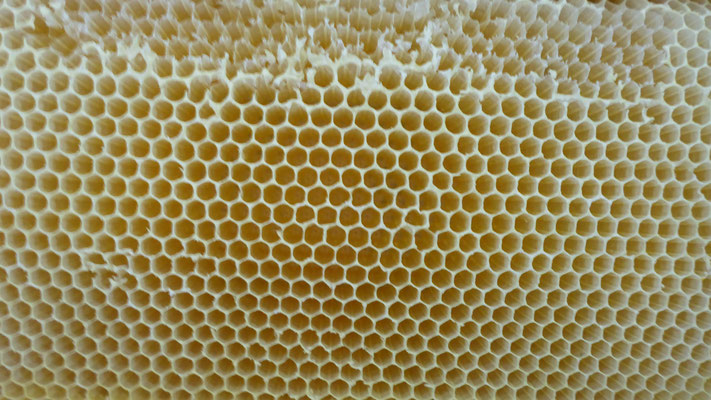 leere Honigwabe - wird dem Volk wieder zurückgegeben