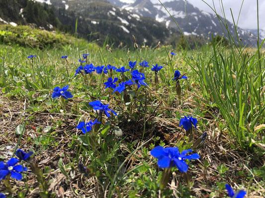 Bergfrühling - Albula