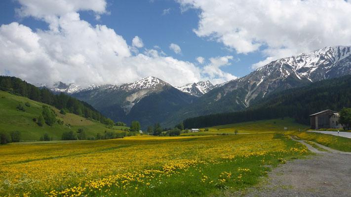 Richtung Münstertal - Bergfrühling