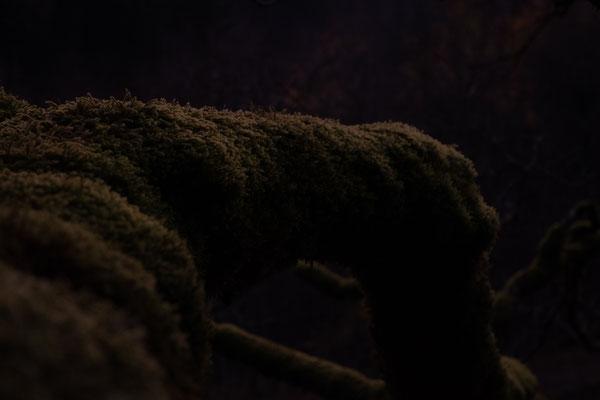 Im letzten Tageslicht ist dieses Bild von einem Baum entstanden welcher komplett mit Moos bewachsen war