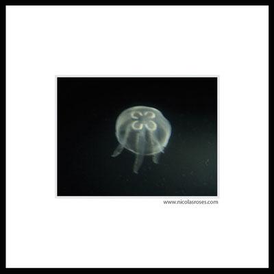 MEDUSE     > Photo 18x24cm     Passe partout blanc 40x40cm > 200€  (cadre + 35€) Nicolas Rosès Photographe