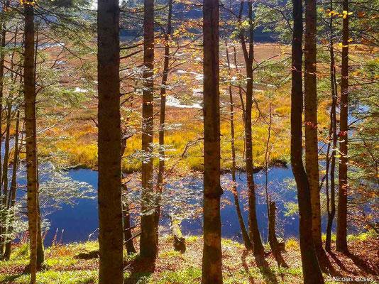 Vosges Alsace Nicolas Rosès Photographe
