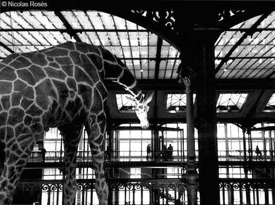 FIVE DAYS IN PARIS 88 Nicolas Rosès Photographe