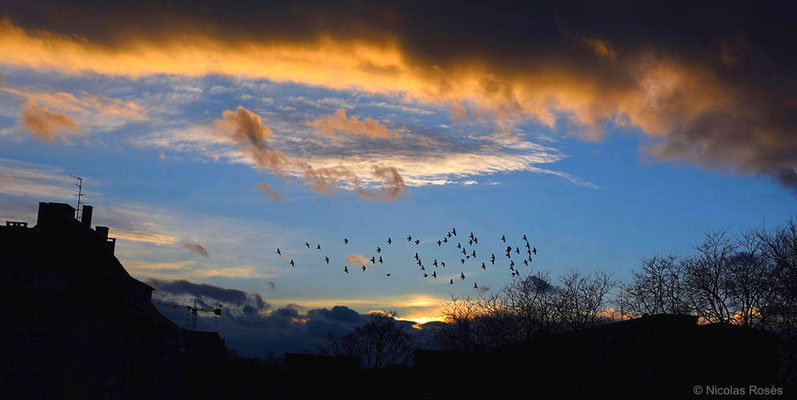 Les oiseaux Strasbourg Nicolas Rosès Photographe