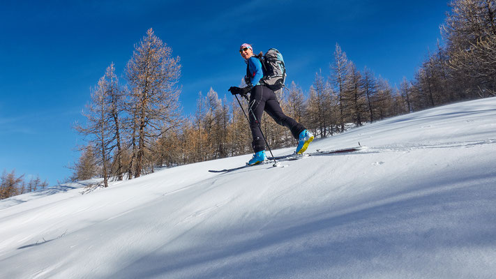 lichte Lärchen beim Anstieg zum Monte Estelletta